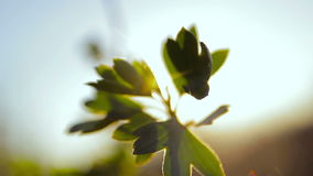 Leaves swaying in the wind in the sun stock footage
