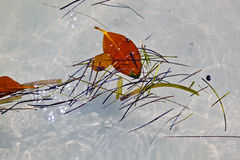 Leaves swimming on the surface of the water Stock Photo