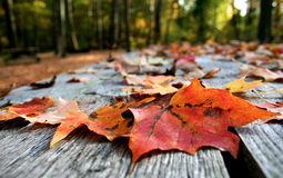 Leaves on Table. Fall leaves on picnic table royalty free stock photography