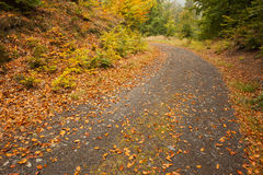 Leaves on tarmac curved country road along trees Royalty Free Stock Photo