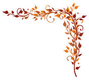 Leaves, tendril, autumn Royalty Free Stock Images