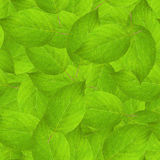 Leaves texture. Green seamless tileable leaves texture Stock Images