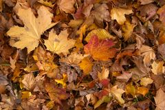 Leaves texture Royalty Free Stock Photography