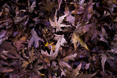 Leaves Texture Stock Image