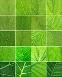 Leaves texture composition. Various 20 leaves Royalty Free Stock Photo