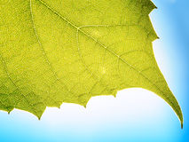 Leaves texture leaf background macro green light closeup Stock Images