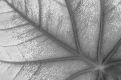 Leaves texture Royalty Free Stock Photos