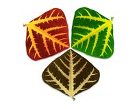 Leaves of three seasons. Stock Images