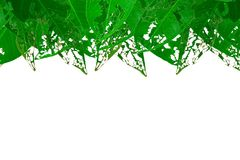 Leaves. Torn leaves green background and empty space for text Stock Photography