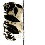 Leaves On Torn Paper. Leaves silhouette border background grunge  in brown and white on ripped, torn paper with copy space Stock Image