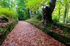 Leaves track in the woods. Royalty Free Stock Images