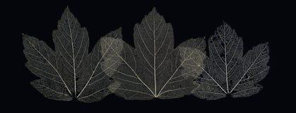 leaves tre Royaltyfri Foto