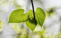 leaves tre arkivbilder