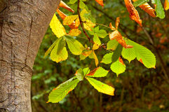 Leaves on a tree Stock Photography
