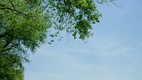 Leaves of a tree against blue sky in the nature stock video footage