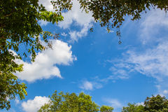 leaves tree and  blue sky Royalty Free Stock Photography