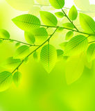 Leaves tree - blurred green vector illustration Stock Photography