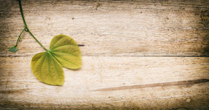 Leaves of a tree (Burma Padauk leaves)on a wood background. Stock Images