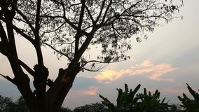 Leaves of tree moving with sunlight, chiangmai Thailand.  stock footage