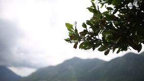 Leaves on a tree in the rain. Spring rain in Montenegro.  stock footage