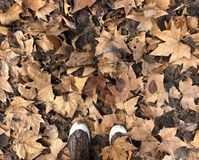 Leaves of the tree on slippers. royalty free stock photography