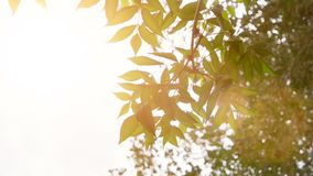 Leaves of tree in sunny day slow motion. Bright sun light in the sky and moving slow tree brunches with fresh leaves. Leaves of tree in sunny day slow motion stock video footage