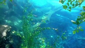 Leaves of a tree underwater. Many leaves hanging from a tree into the water stock video footage