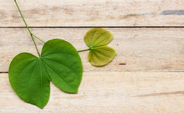 Leaves of a tree on a wood background. Stock Images