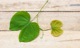 Leaves of a tree on a wood background. Royalty Free Stock Images