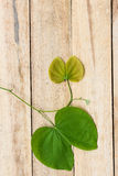 Leaves of a tree on a wood background. Royalty Free Stock Image