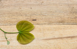Leaves of a tree on a wood background Royalty Free Stock Photos