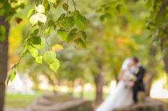 Leaves on the trees. At the begining of autumn with bride and groom in background Stock Photography