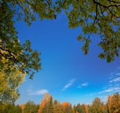 Leaves, trees and blue sky Stock Images