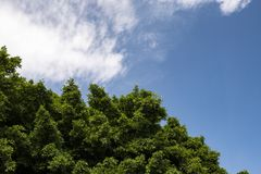 Leaves of trees with clouds. Fuerteventura Royalty Free Stock Images