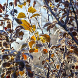 The leaves of trees covered with thick snowflakes. Royalty Free Stock Photos