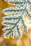 The leaves of trees covered with thick snowflakes. Stock Images