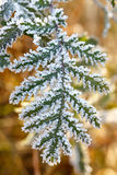leaves of trees covered with thick snowflakes. Stock Images