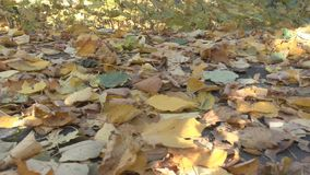 Leaves of the trees on earth. Autumnal leaves on the ground stock footage