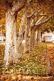 The leaves of the trees fall Royalty Free Stock Images