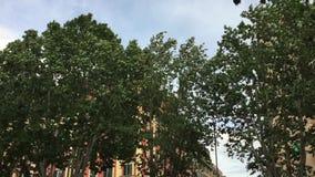 Leaves on trees stock video footage