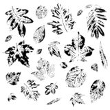 Leaves of trees. Postcard with leaves prints. The leaves of the trees. royalty free illustration