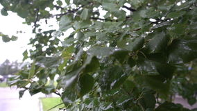 The leaves on the trees in the rain, cityscape stock video