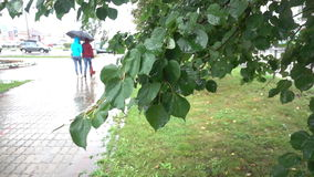 The leaves on the trees in the rain, cityscape stock video footage