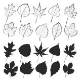 Leaves of trees. Sketches of leaves from trees Royalty Free Stock Photography