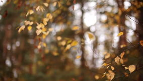 The leaves on the trees swaying in the autumn forest stock footage