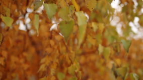 The leaves on the trees swaying in the autumn forest stock video footage