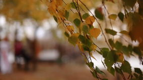 The leaves on the trees swaying in the autumn forest stock video