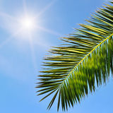 Leaves of tropical palm trees Stock Photography