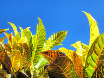 Leaves of tropical plants against sky Stock Images
