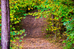 Leaves  tunnel in forest. Leaves tunnel in forest, fall time Royalty Free Stock Photo
